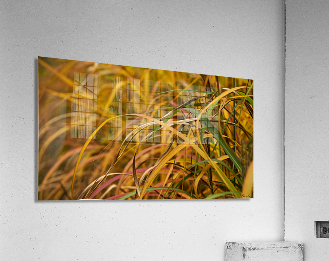 FLAMBOYANTES GRAMINEES NO. 1 - FLAMBOYANT GRASSES NO. 1  Impression acrylique