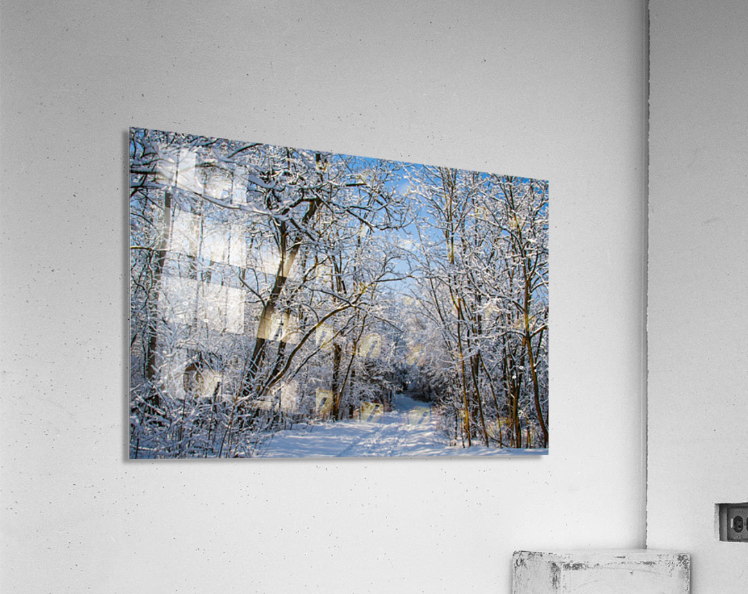 Forest covered with snow  Acrylic Print