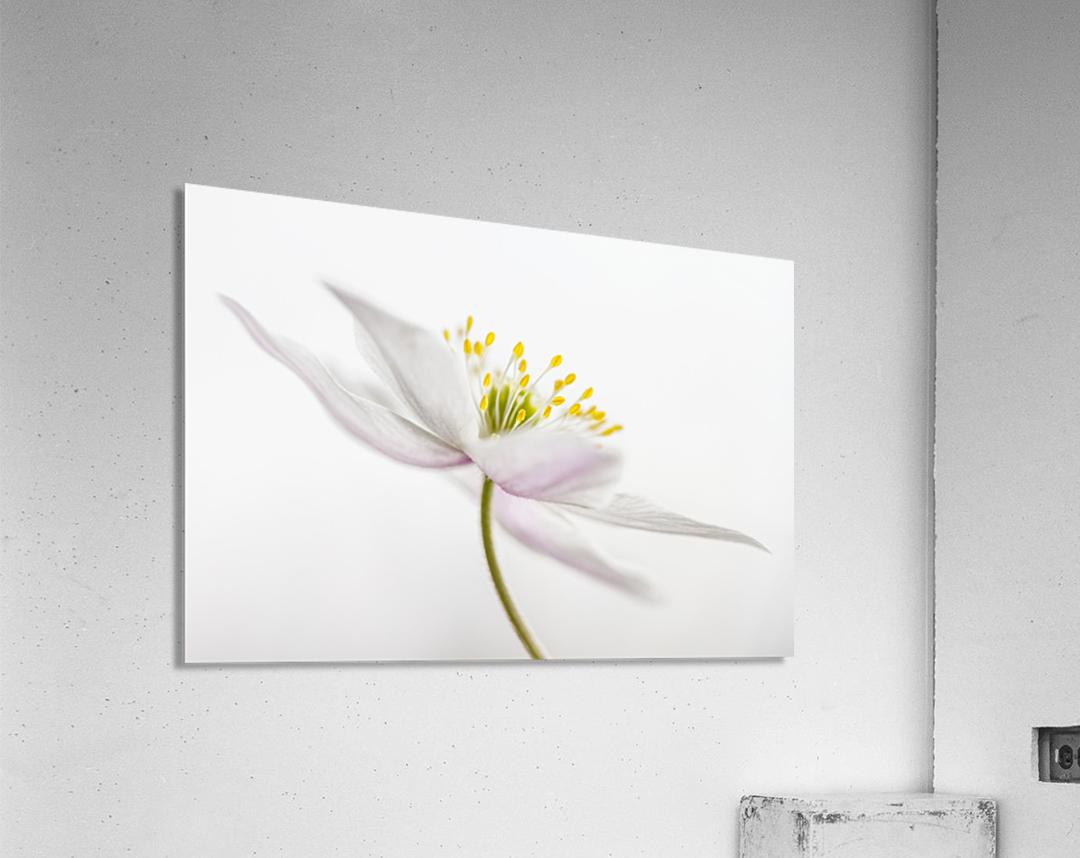 Nemorosa  Acrylic Print