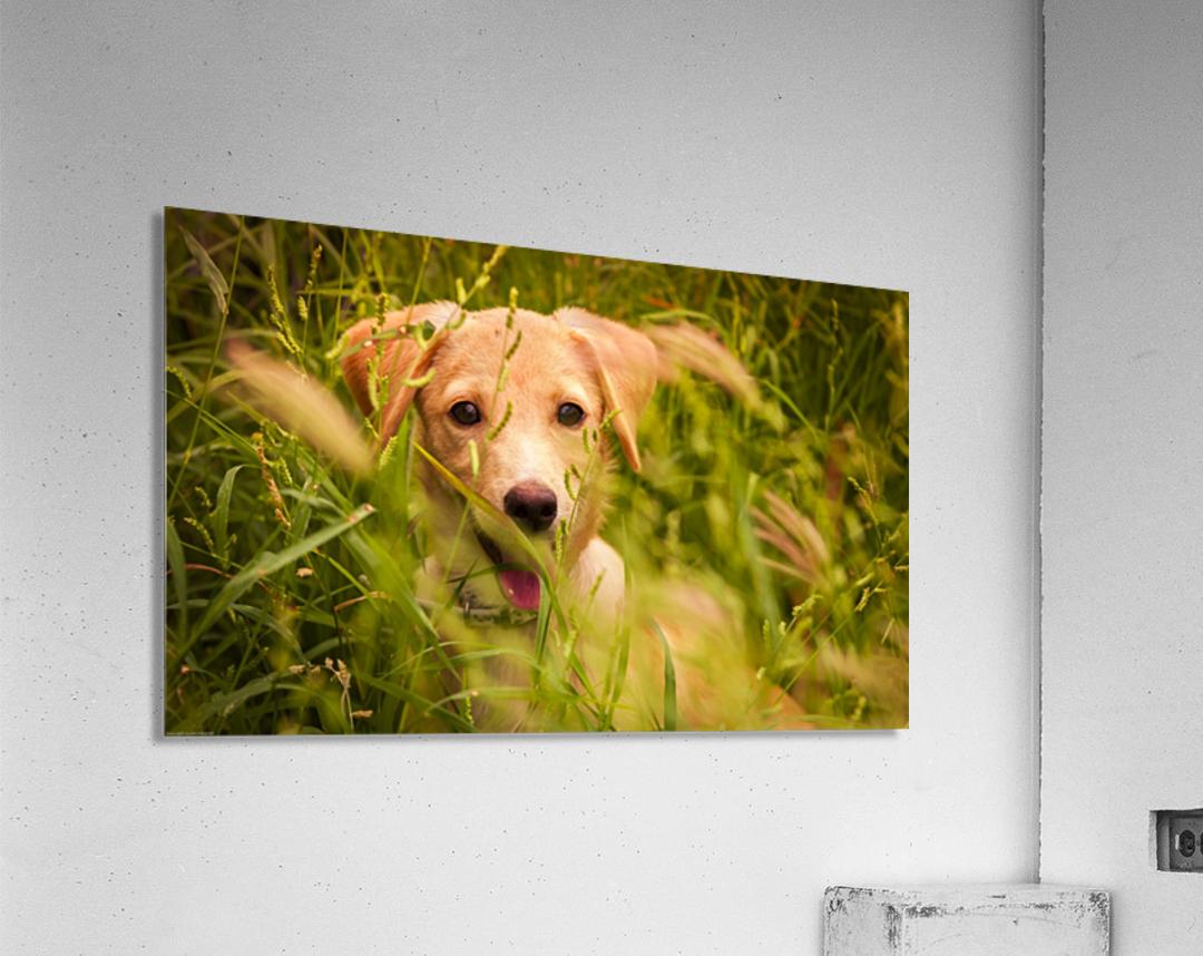 IMG_1411 2  Acrylic Print