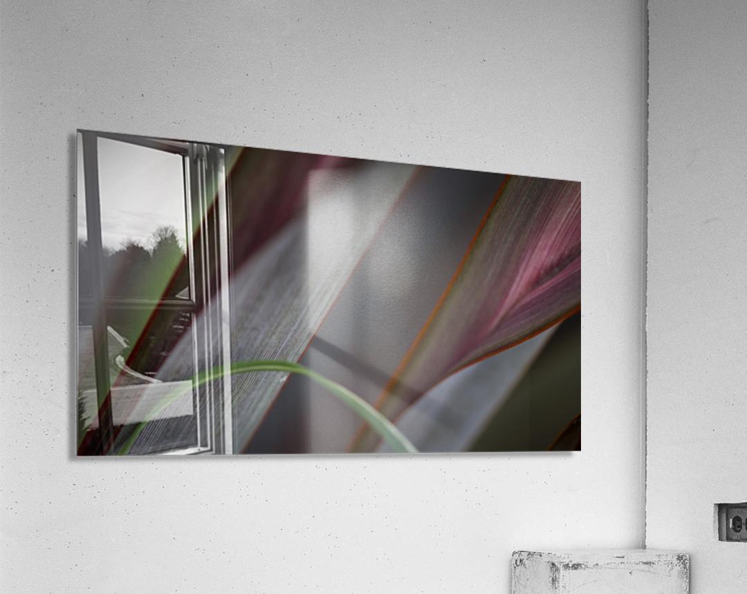 ---  Acrylic Print
