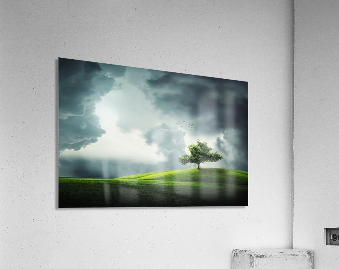 Lonely Tree, birds  Acrylic Print