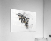 Illustration of a dolphin splashing through the surface of the water  Acrylic Print