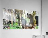 233-Perfect Profiles  Acrylic Print