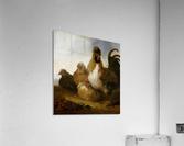 Aelbert Cuyp Rooster  Acrylic Print