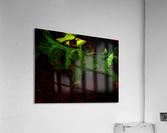 sofn-CA35DBE6  Acrylic Print