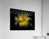 sofn-F1BE10A1  Acrylic Print