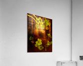 sofn-640C45D8  Acrylic Print