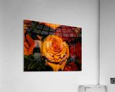 sofn-6411E9A2  Acrylic Print