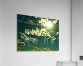 sofn-AEA3DE05  Acrylic Print