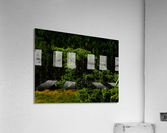 sofn-30401FB1  Acrylic Print