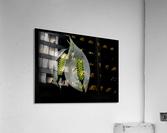 sofn-068EEE2A  Acrylic Print