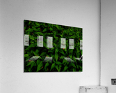 sofn-6D81AE31  Acrylic Print