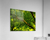 sofn-C1F96356  Acrylic Print