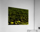 sofn-E1D3554D  Acrylic Print