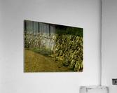 sofn-B1778082  Acrylic Print