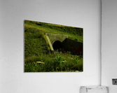 sofn-E31F896F  Acrylic Print