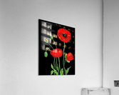 Red Poppy Flowers Watercolor  Acrylic Print
