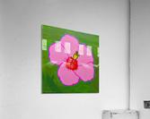 Hibiscus. Annie F  Acrylic Print