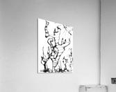 Cactus Sunrise  Acrylic Print