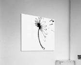 Carried Away  Acrylic Print