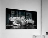 Refreshing  Acrylic Print