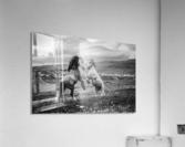 Wild and free  Acrylic Print
