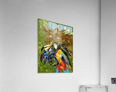 Orignal_Moz_Anik_ Lafreniere  Acrylic Print