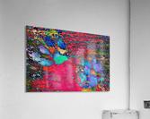 Paw Prints Colour Explosion  Acrylic Print