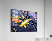 Koi Carp Huddle  Acrylic Print