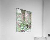 Echinacea  Acrylic Print