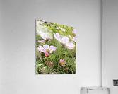 Light and Breezy  Acrylic Print