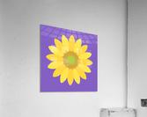 Sunflower (12)_1559875861.1864  Acrylic Print