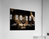african lion wildcat mane closeup  Acrylic Print