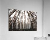 See the Sun  Acrylic Print