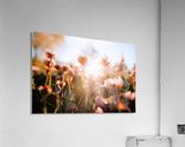 1564120021459~2  Acrylic Print