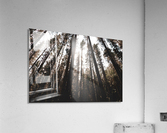 20190802_182121  Acrylic Print