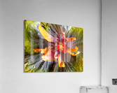 The Multicolored You  Acrylic Print