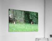 Bunnies Two  Acrylic Print