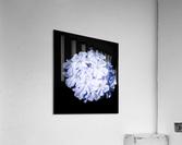 Blue Plumbago  Acrylic Print