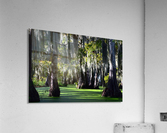 Swampy  Acrylic Print
