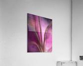 Pinky 4  Acrylic Print