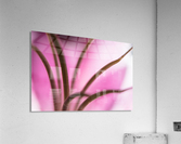 Pinky 3  Acrylic Print
