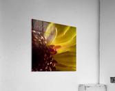 Jaune 2  Acrylic Print
