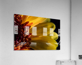 Jaune 1  Acrylic Print