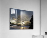 Winter Oak  Acrylic Print