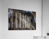 Downy on a Branch  Acrylic Print