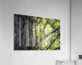 Ent  Acrylic Print