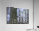 Blue Yonder  Acrylic Print