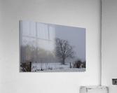 Tree in the Mist  Acrylic Print